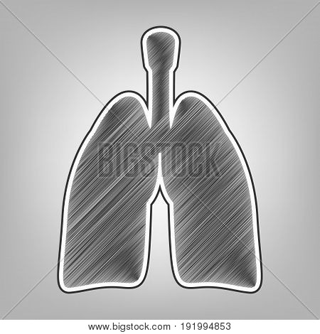 Human anatomy. Lungs sign. Vector. Pencil sketch imitation. Dark gray scribble icon with dark gray outer contour at gray background.