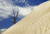 Desert dune. Death valley national park. California. USA poster