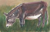 Watercolor gray donkey is grazing in green grass poster