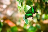 beautiful butterfly on a green foliage poster