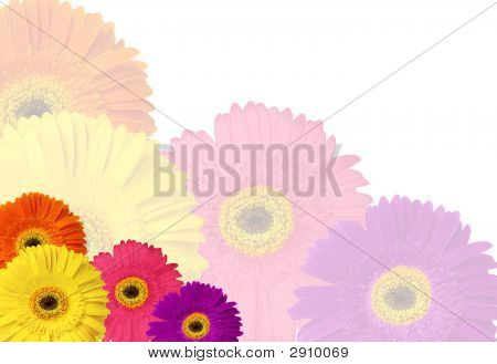 Colorful Gerber Daisy Stationary