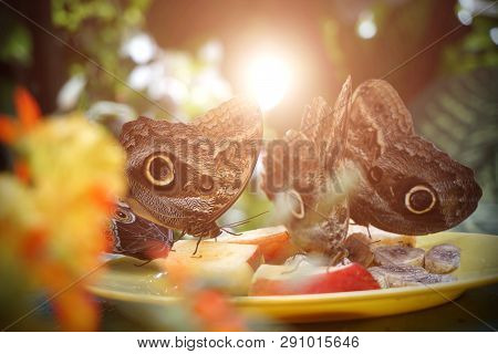 A Flock Of Butterflies Eating Fruit In The Reserve. Close-up