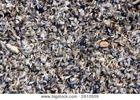 Wisconsin Shells