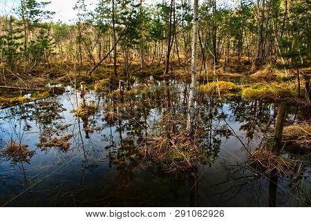 Little Lagoon In Czech Tourist Region Of Machuv Kraj