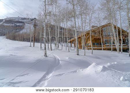 Quaking Aspens And Cabin On Snowy Mountain In Utah