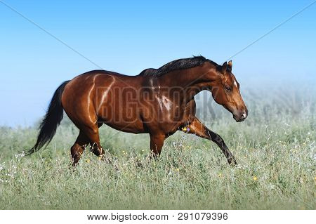 A Beautiful Bay Horse Jumps In A Field Against A Blue Sky. The Exercise Of A Sports Horse. Stallion
