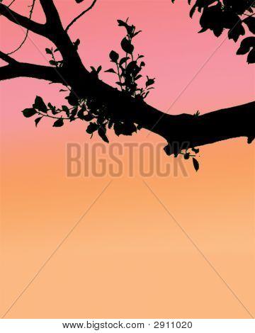 Sunset Tree Sillhoette