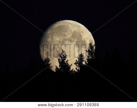 Morgonbild På Månen På Väg Ner Bakom Träden.