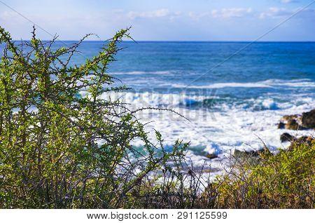 Sea With Waves And Bushes On The Sea Coast. Non-urban Scene.