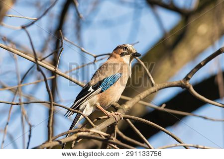 Close Up Of A Bird In Nature. Amazing Nature. Close Up Of A Bird In Nature. Bird. Nature. Blue Bird