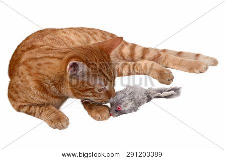 Ginger Kitten Laying And Playing With A Mouse Toy