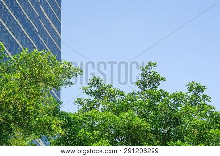Tree And City Concept - Close Up Green Tree With Blue Sky And Office Tower In City Background And Co