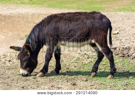 Photo Of Black Jackass On The Ground In The Zoo