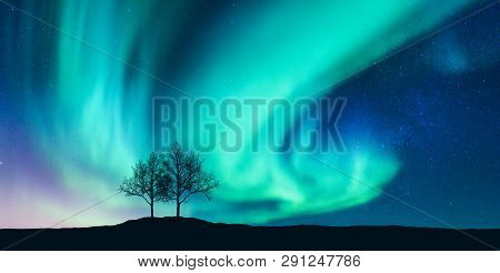 Aurora Borealis And Silhouette Of The Trees On The Hill. Aurora. Northern Lights. Sky With Stars And