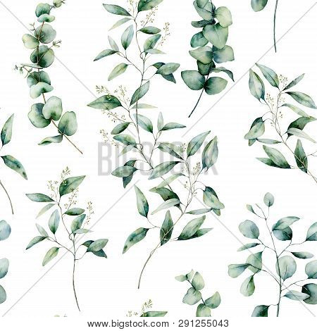 Watercolor Different Eucalyptus Seamless Pattern. Hand Painted Eucalyptus Branch And Leaves Isolated