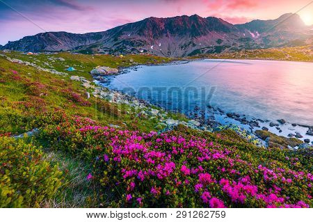 Stunning mountain sunset landscape, fantastic campsite near Bucura lake. Camping place with colorful tents and pink rhododendron flowers at sunset, Retezat mountains, Carpathians, Transylvania, Romania, Europe poster