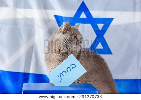 Cute Cat And Vote Box On Election Day Over Israel Flag Background. Hebrew Text I Voted On Voting Pap