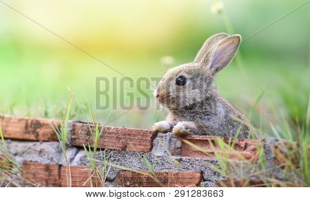 Cute Rabbit Sitting On Brick Wall And Green Field Spring Meadow / Easter Bunny Hunt For Easter Egg O
