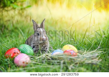 Easter Bunny Hunt Easter Egg On Green Grass Nature Background / Colorful Eggs In The Nest And Little