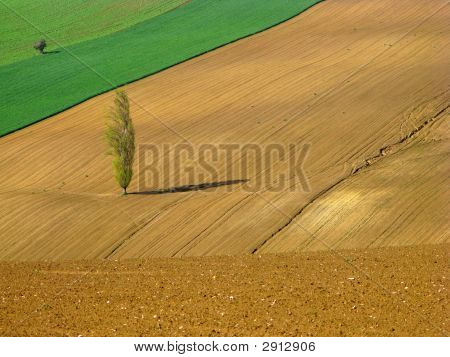close-up of fields with solitary poplar