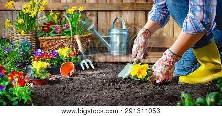Gardener planting flowers in sunny garden