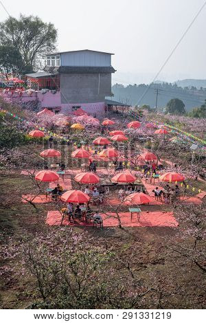 Chengdu, Sichuan Province, China - March 20, 2019: People Enjoying The Peach Blossom Festival Under
