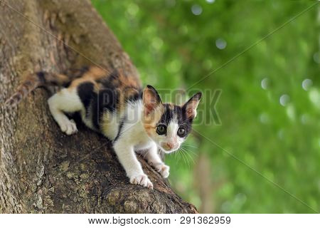 Calico Kitten Cat Catch On Tree, Cute Kitten Cat, Little Kitten Cat, Cute Pussycat, Calico Pussycat,
