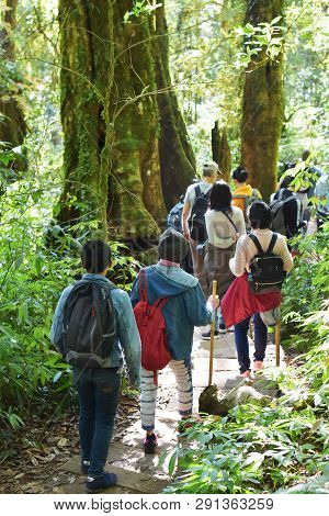 Travelers Traveling On Footpath In Rainforest, Ecotourism In Beautiful Nature Environment In Trail O
