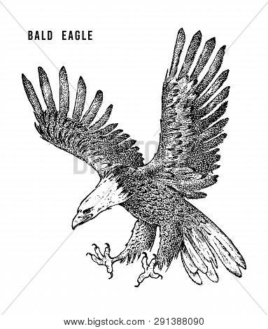 Bald Eagle. Wild Forest Bird Of Prey. Hand Drawn Sketch Graphic Style.  Fashion Patch. Print For  T-