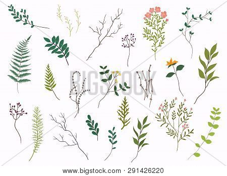 Floral Elements. Hand Drawn Design Elements. Collection Of Spring Flowers, Leaves, Dandelion, Grass.