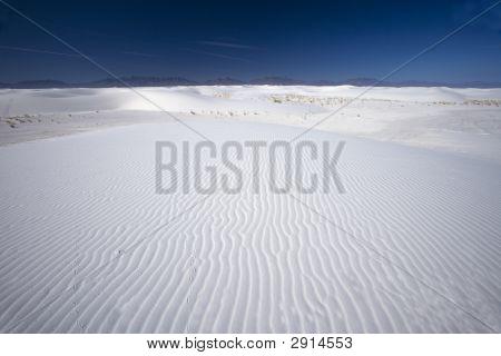 124 Tracks Across The White Sand