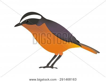 Rueppell's Robin-chat (cossypha Semirufa)