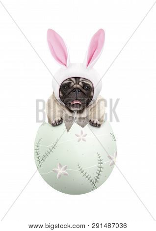 Funny Cute  Pug Puppy Dog Wearing Bunny Ears, Sitting In Pastel Green Easter Egg, Isolated On White