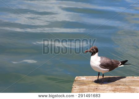 Single Fulmar bird by the ocean