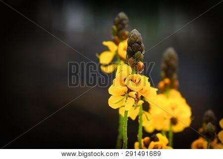 Close up shot of yellow Iris flowers
