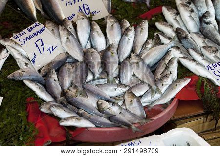 Raw Wet Bluefish With Price Tag At Fish Market In Istanbul, Turkey