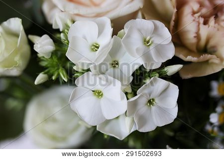 Beautiful Small White Orchids Flowers With Blurred Roses In Background - Close Up Stock Photo