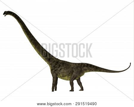 Mamenchisaurus Youngi Dinosaur Side Profile 3d Illustration - Mamenchisaurus Youngi Was A Herbivorou