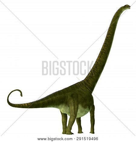 Mamenchisaurus Hochuanensis Dinosaur Tail 3d Illustration - Mamenchisaurus Hochuanensis Was A Herbiv