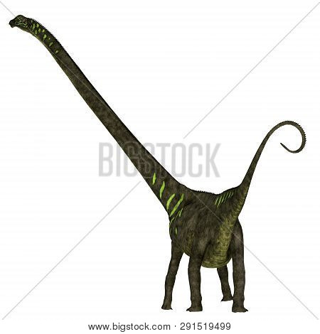 Mamenchisaurus Youngi Dinosaur Tail 3d Illustration - Mamenchisaurus Youngi Was A Herbivorous Saurop