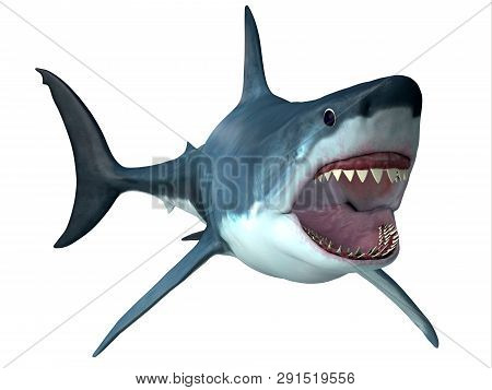 Megalodon Predator Shark 3d Illustration - Megalodon Was An Enormous Carnivorous Shark That Roamed T