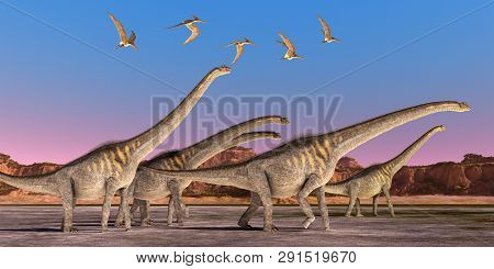 Sauroposeidon Dinosaur Herd 3d Illustration - A Flock Of Pteranodon Reptiles Fly Over A Herd Of Saur