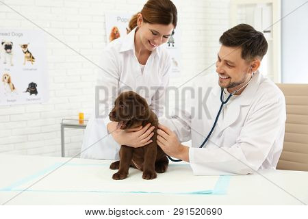 Veterinarian And His Assistant Examining Cute Labrador Puppy In Clinic