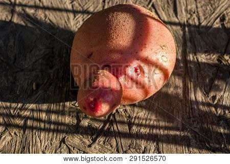 Potato Fruit In The Form Of A Face
