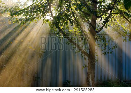 Beautiful Rays Of Light Making Their Way Through The Leaves Of A Tree In The Garden