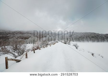 snowy path to frosty beech forest in Nebrodi Park, Sicily