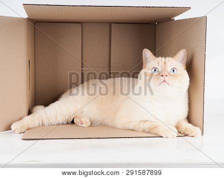Ginger tomcat lying in the paper box, cardboard box with a cat on white background poster