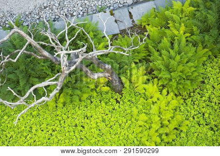 Abstract Background With Green Ferns, Dry Tree And Stone Surface