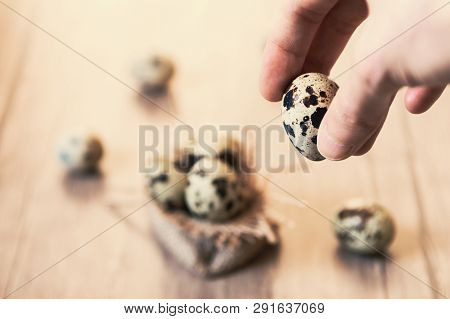 Female Hand Holding A Quail Egg. Blurry Quail Eggs On Wooden Background.