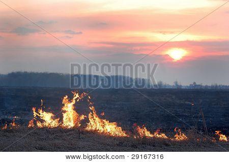 Fire of grass at sunset